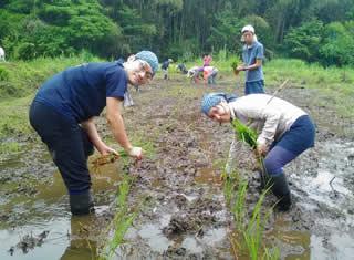 やつだ開拓団 第二期団員募集 -美しい谷津田の風景を復活させよう-_c0177665_18184191.jpg