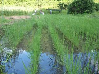 やつだ開拓団 第二期団員募集 -美しい谷津田の風景を復活させよう-_c0177665_1819265.jpg