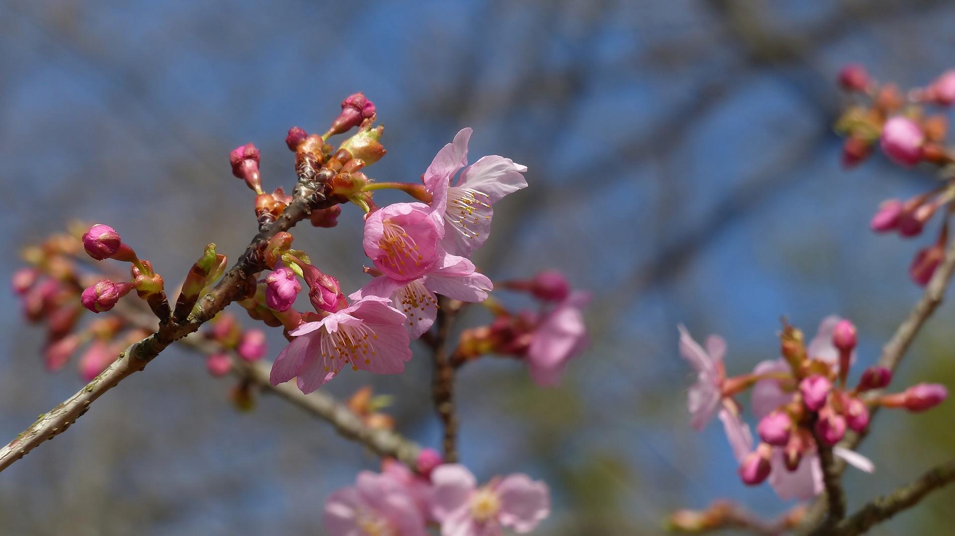 鳥のいないお花見_a0185081_21163570.jpg