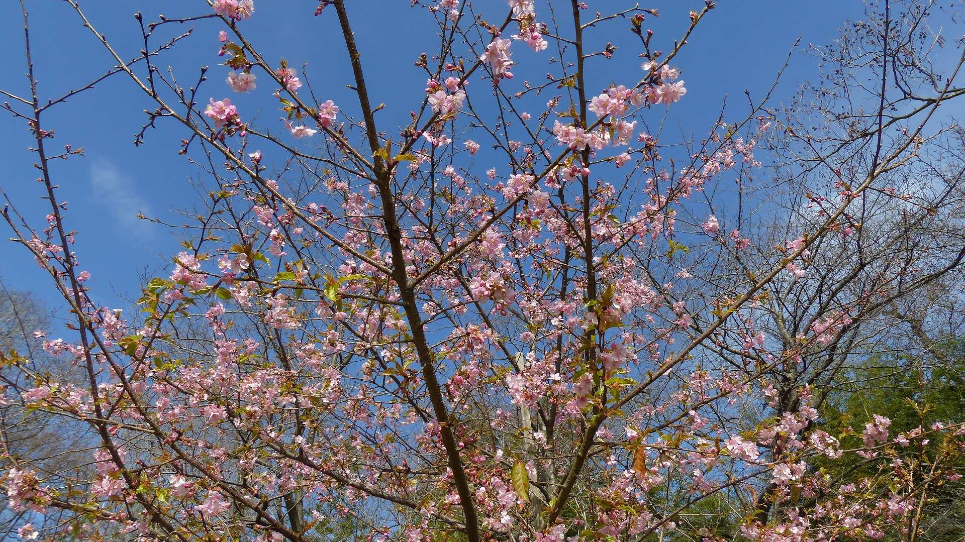 鳥のいないお花見_a0185081_2117361.jpg
