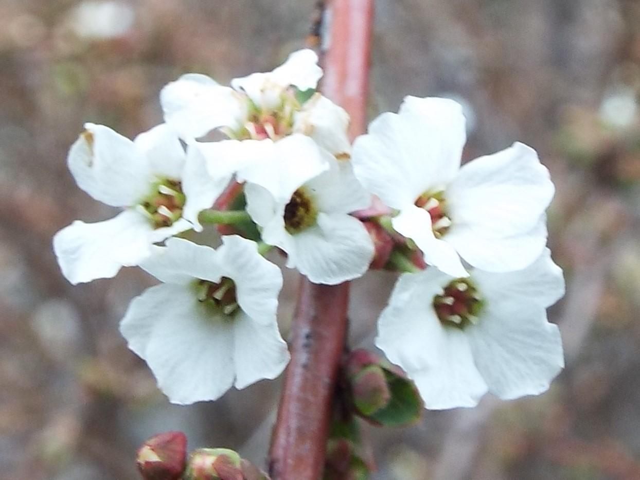 2月23日 東高根森林公園観察会_e0145782_11525867.jpg