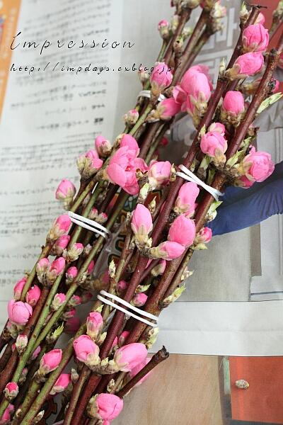 桃の花_a0085317_193834.jpg