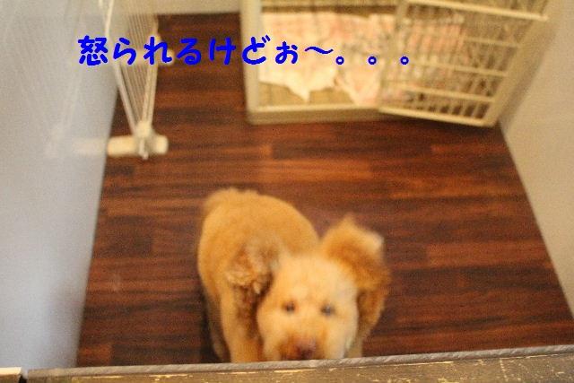 b0130018_7123554.jpg