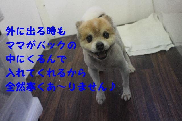 b0130018_714338.jpg