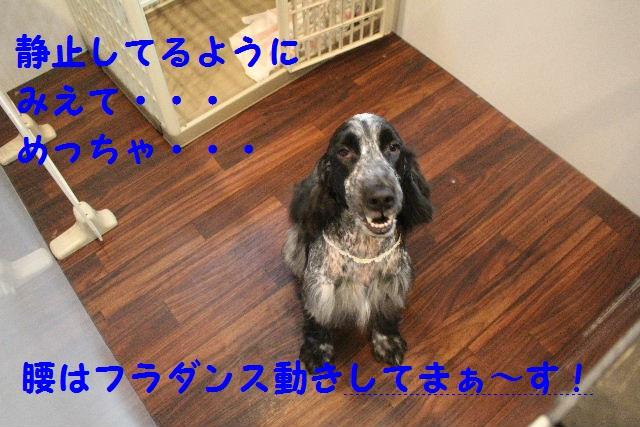 b0130018_716267.jpg