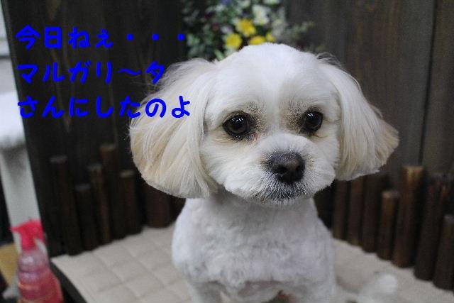 b0130018_76452.jpg