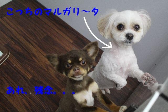 b0130018_7797.jpg