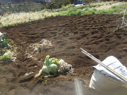 耕して.耕して....ジャガイモの準備_b0137932_1783343.jpg