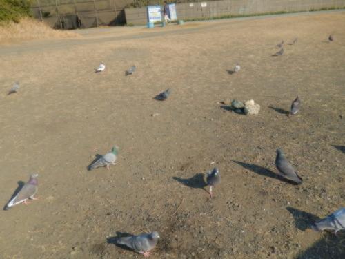 鳩も...かもめも  (小鳥海岸編)_b0137932_22391139.jpg