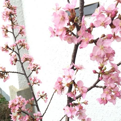 花、花、花。_d0343297_09595081.jpeg