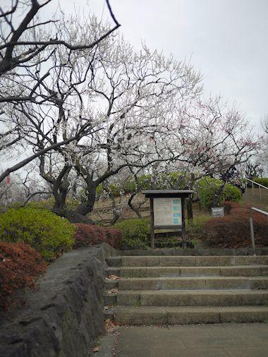 羽根木公園・梅まつりに行って来たよ。_c0090198_1423356.jpg