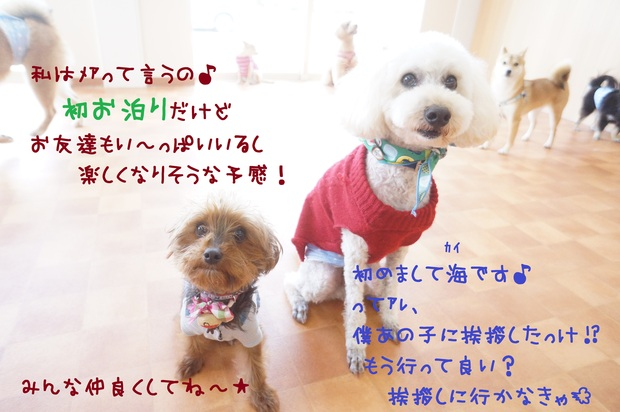 d0220513_1441413.jpg