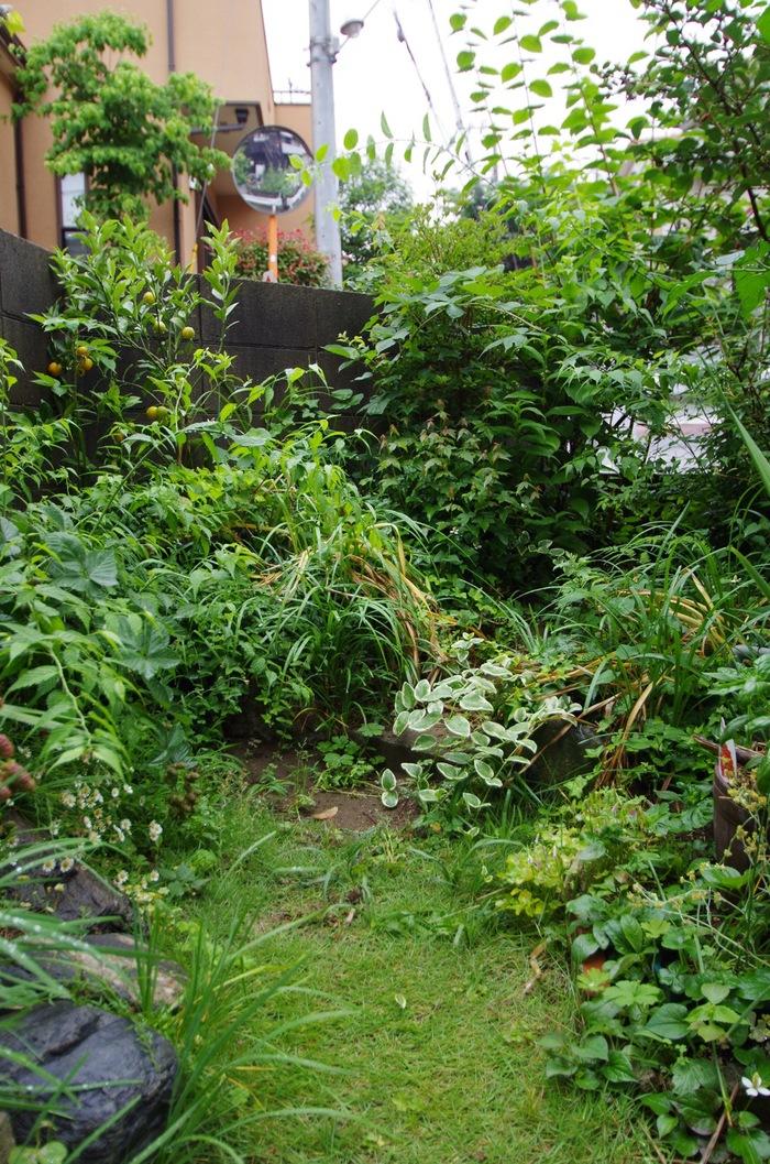 我が家の庭の成長_c0004024_1835596.jpg