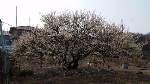 そろそろ春ですよ_a0345833_13572732.jpg
