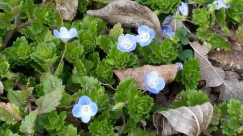 そろそろ春ですよ_a0345833_14005377.jpg
