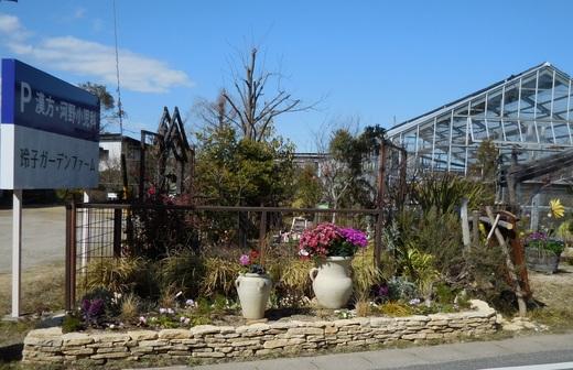 ガーデンファームのショー花壇_f0139333_23375763.jpg