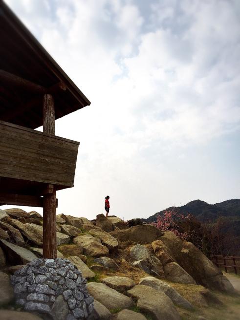 上関の桜まつり(河津さくら)_f0183846_15340588.jpg