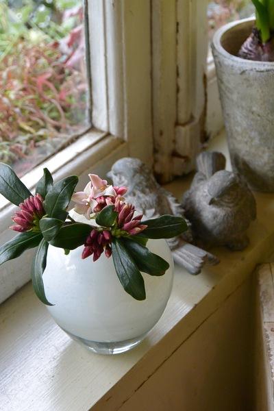 沈丁花の香り。。。_a0229658_7572653.jpg