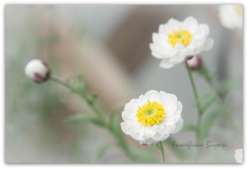 京都植物園_d0344864_22063841.jpg