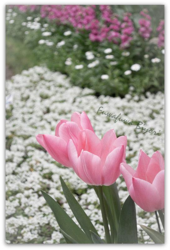 京都植物園_d0344864_22065873.jpg