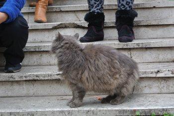 ローマの休日 ~世界ネコ歩き ローマ~_f0204175_15333924.jpg
