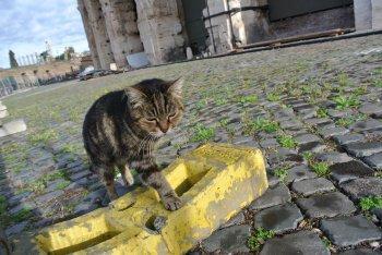 ローマの休日 ~世界ネコ歩き ローマ~_f0204175_15362683.jpg