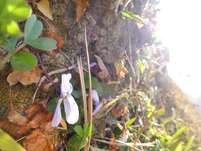小さい春見~つけた♫_c0165589_8223062.jpg