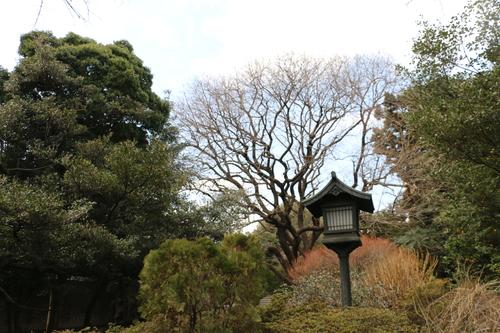 史跡 湯島聖堂・・・5_c0075701_22174613.jpg