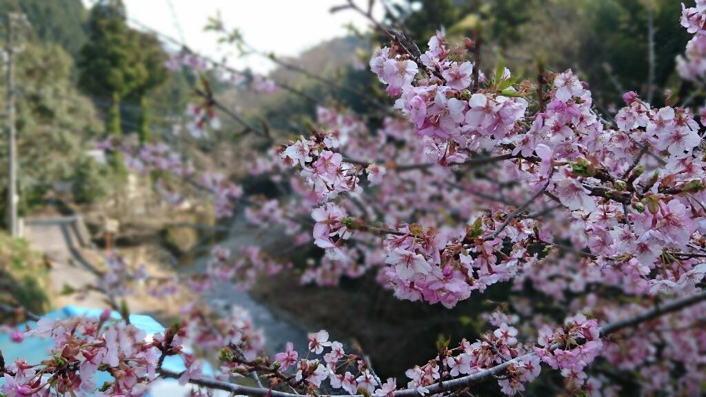 滝の谷の春_b0093515_15062566.jpg