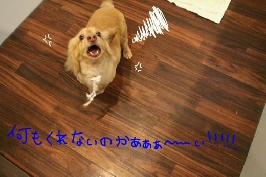 b0130018_00044767.jpg