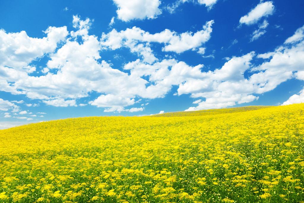 「菜の花みたいな女の子」との再会 ~ この世の残り時間(笑)_c0189426_16190460.jpg