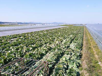 有機栽培キャベツ 平成28年度産完売御礼!!_a0254656_18371612.jpg