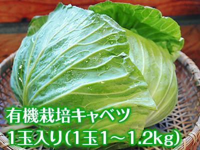 有機栽培キャベツ 平成28年度産完売御礼!!_a0254656_19191372.jpg