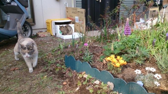 春の庭作り_d0116059_22214389.jpg