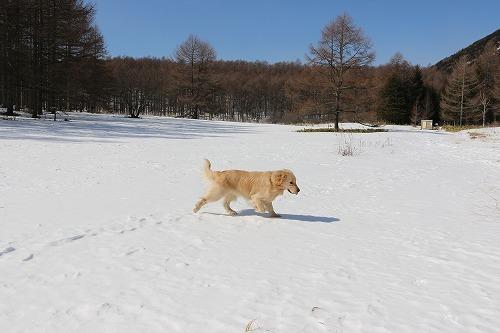 雪が少ないけど・・・_c0172184_16194745.jpg