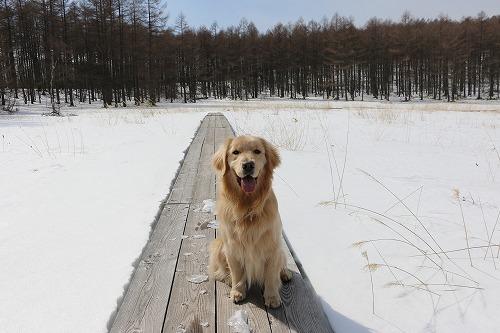 雪が少ないけど・・・_c0172184_16210218.jpg