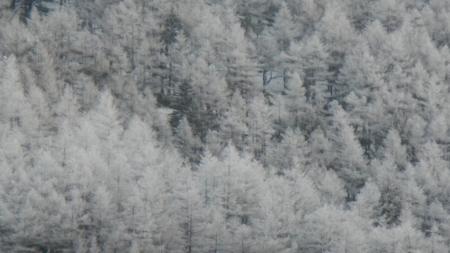 霧氷の朝_e0120896_06264289.jpg