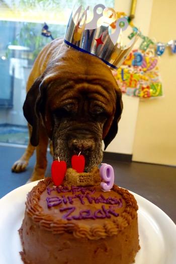 Birthday cake の巻_e0192217_21334957.jpg