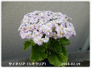 e0033229_1745272.jpg