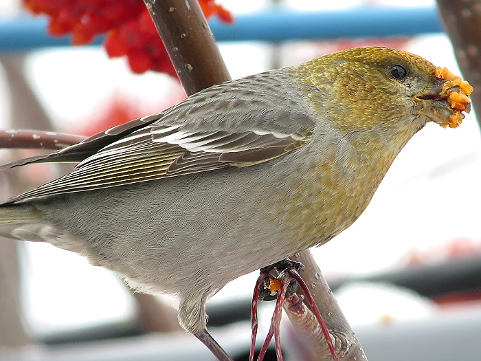 デジスコ鳥日記