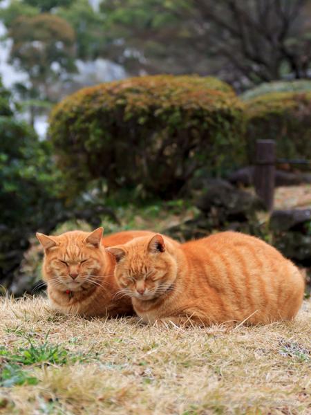 猫のいる風景 日比谷公園 チャッピー仲良し兄弟_b0133053_0221079.jpg