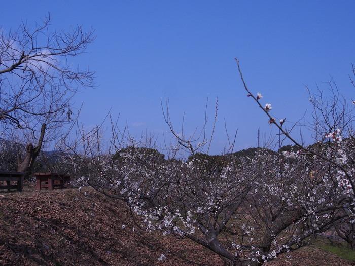 晴れた日の散策。鳥栖市山浦町で。_a0149488_21534817.jpg