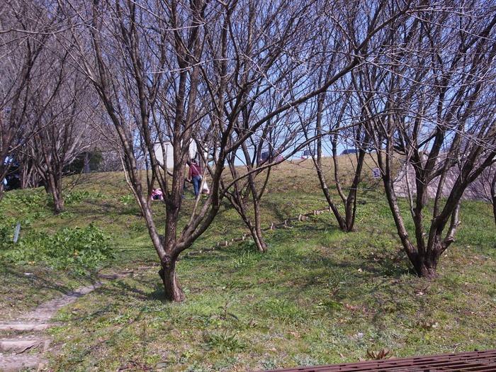 晴れた日の散策。鳥栖市山浦町で。_a0149488_21545387.jpg