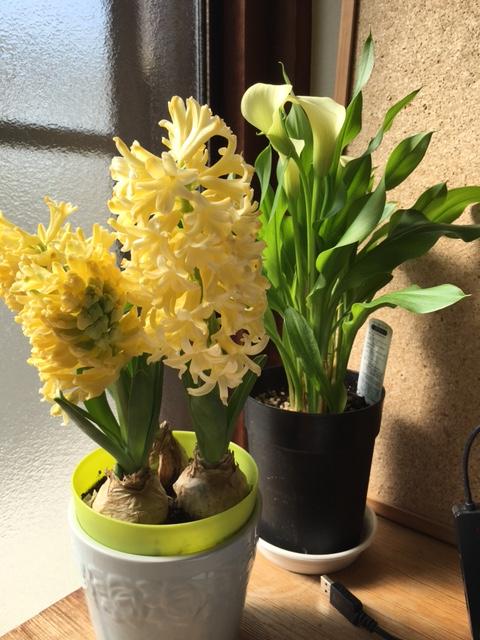 春だから_b0349589_19274362.jpg