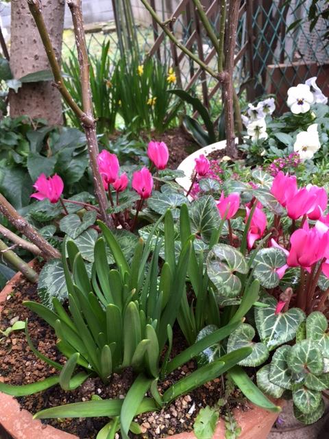 春だから_b0349589_19332074.jpg