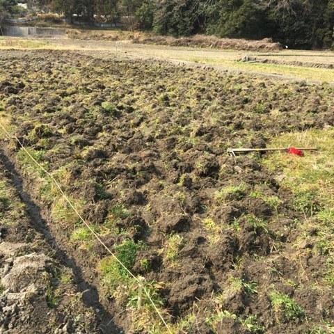 庭の「貝母」バイモが 春を告げています。_f0229190_10122262.jpg