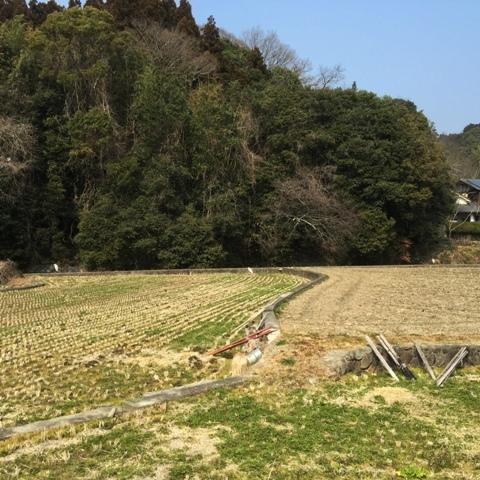 庭の「貝母」バイモが 春を告げています。_f0229190_10154338.jpg