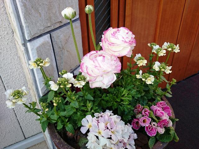 春ですね。イチゴサンドですね。_e0167593_048187.jpg