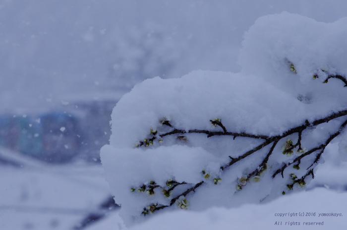 また冬に逆戻り_d0309612_0184774.jpg