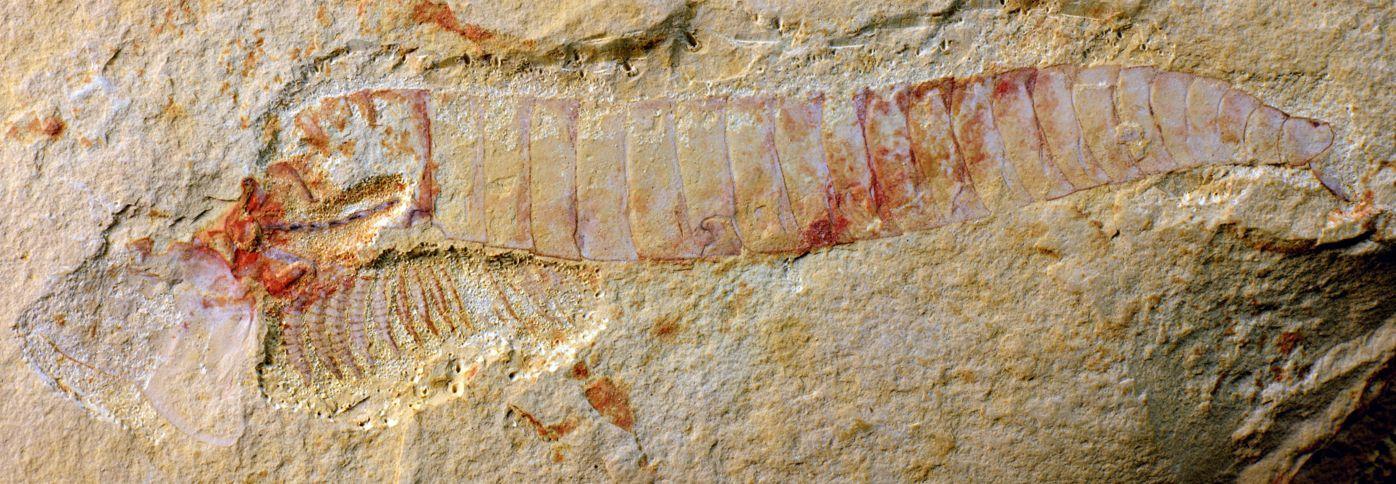 寒さの戻りとカンブリア紀の化石の解析_c0025115_19243593.jpg